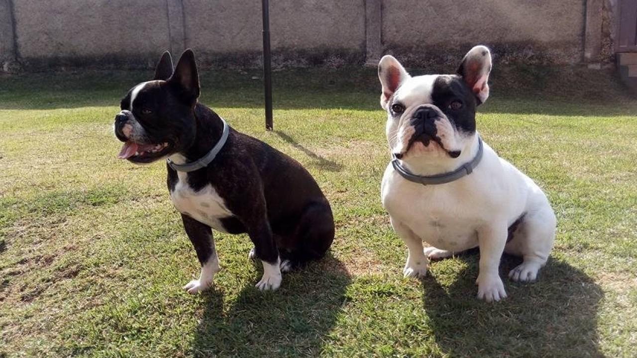 Foto: Obesidade em cães e gatos