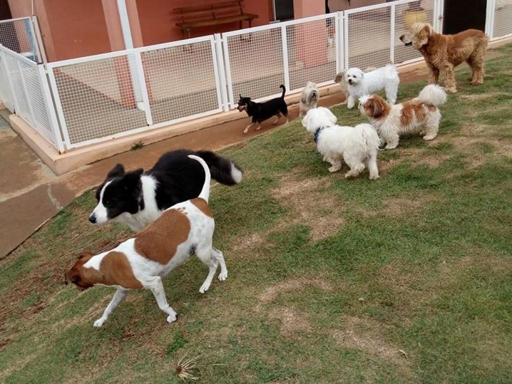 Foto: Erros que cometemos com os cães