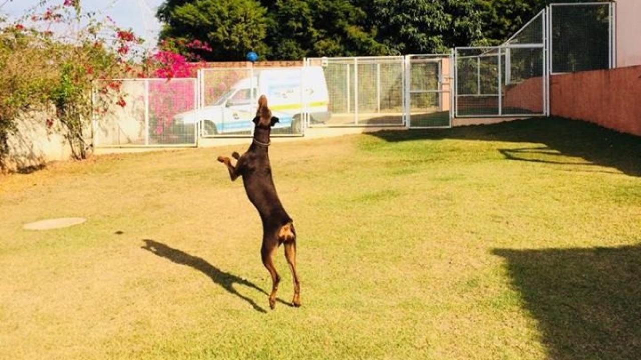 Foto: Qual a raça de cão é a mais inteligente?