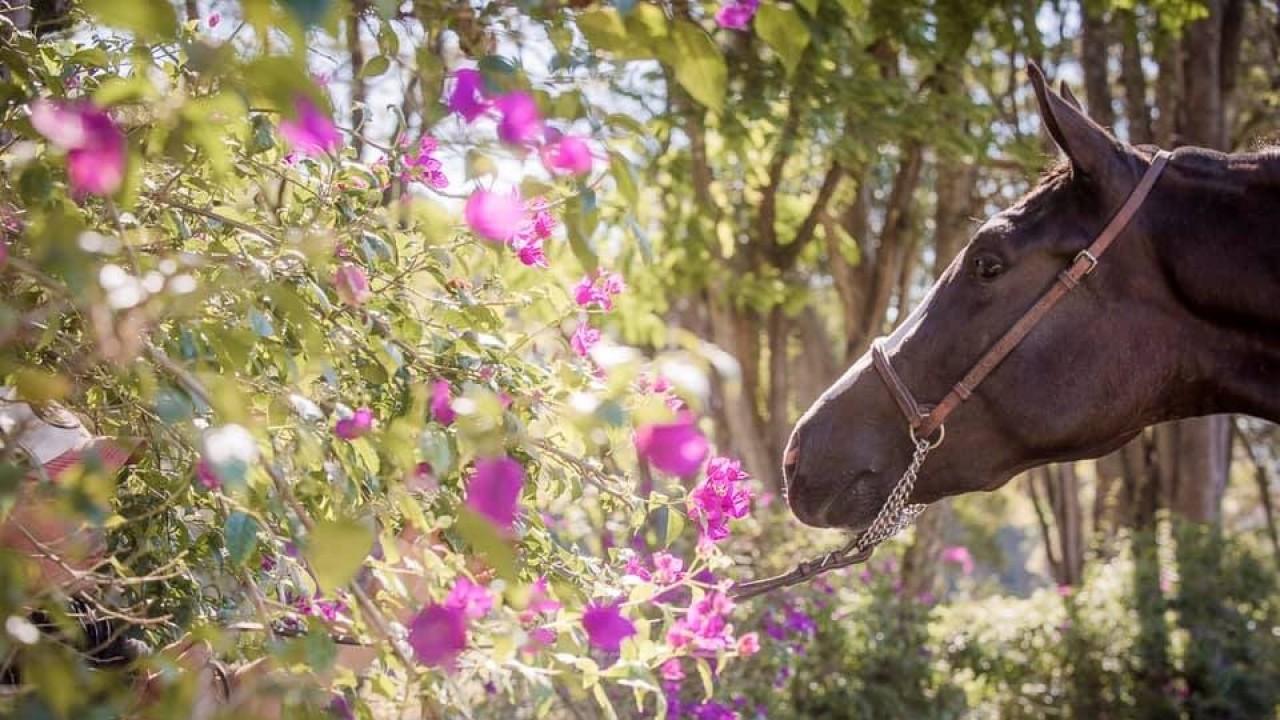 Foto: O cavalo na cura da Depressão