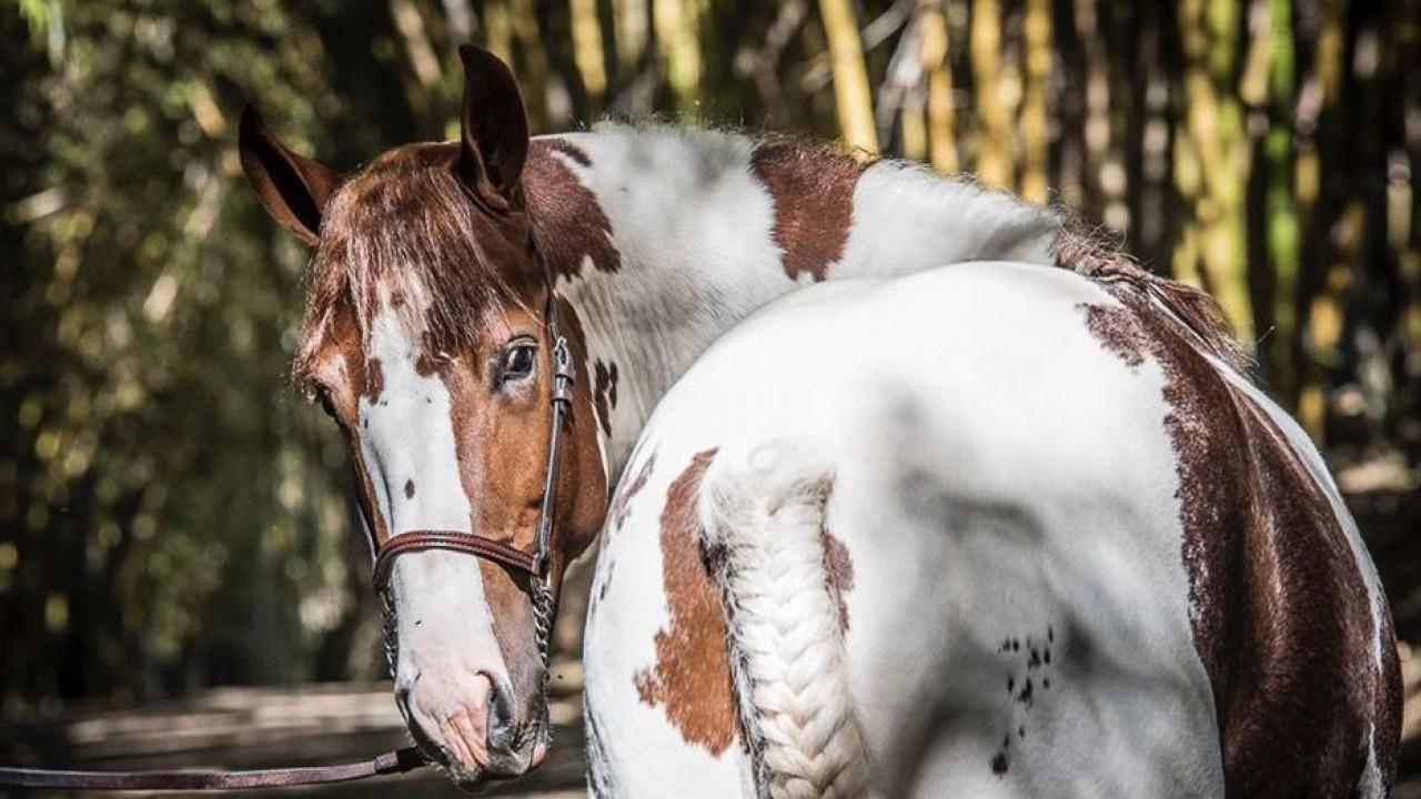 Foto: Sentimentos e gestos equinos