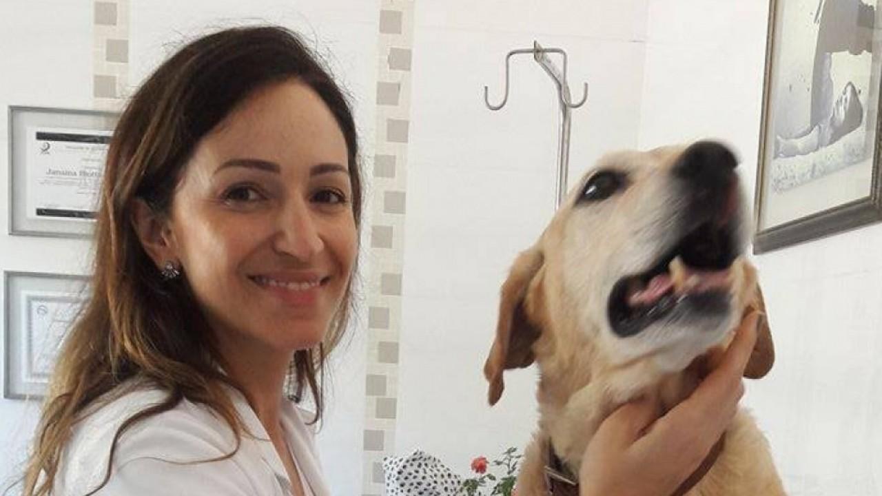 Foto: A Ozonioterapia nos pets