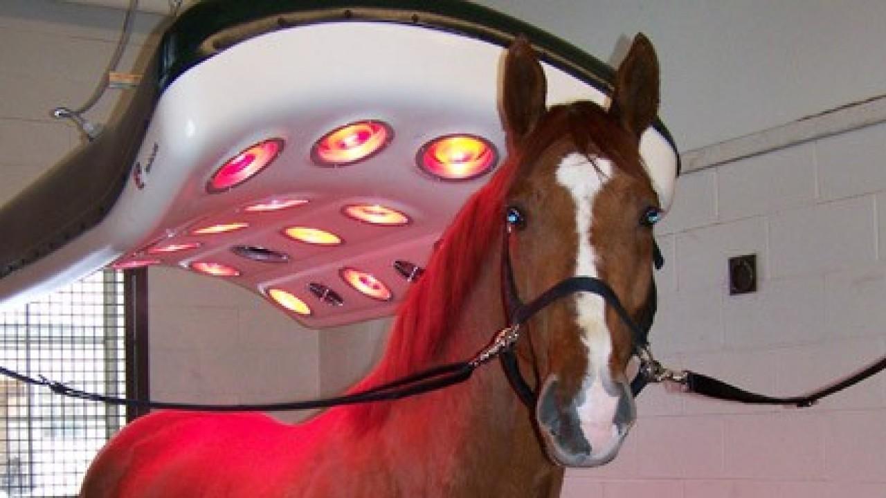 Foto: Reabilitação do cavalo atleta